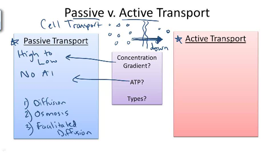 passive and active transport worksheet answer key