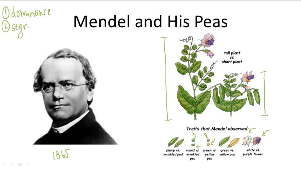 Mendelian Genetics - Overview