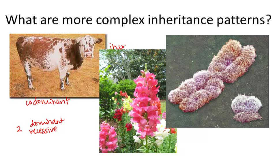 Complex Inheritance Patteerns - Overview