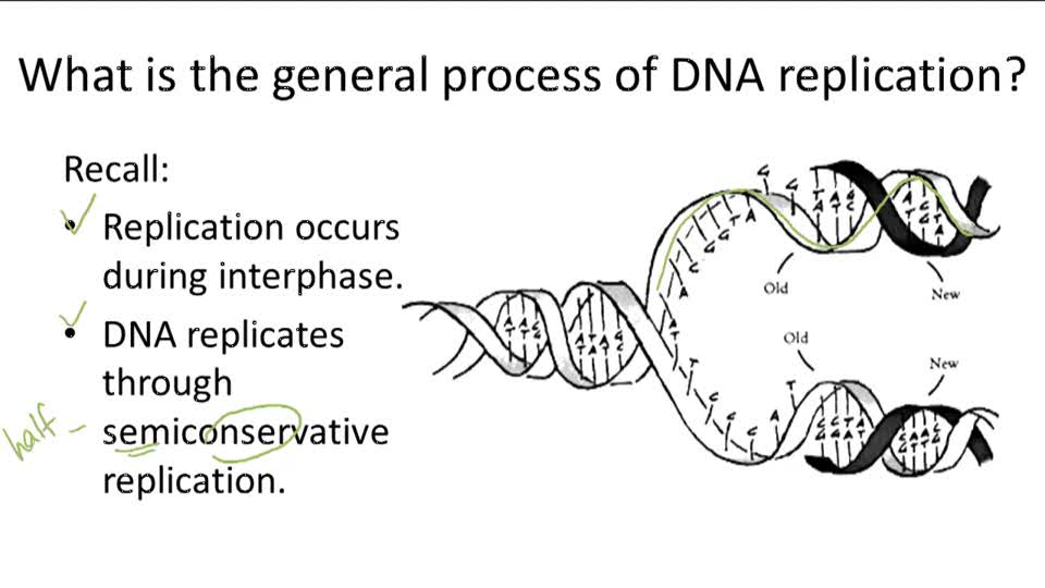 DNA Replication - Overview