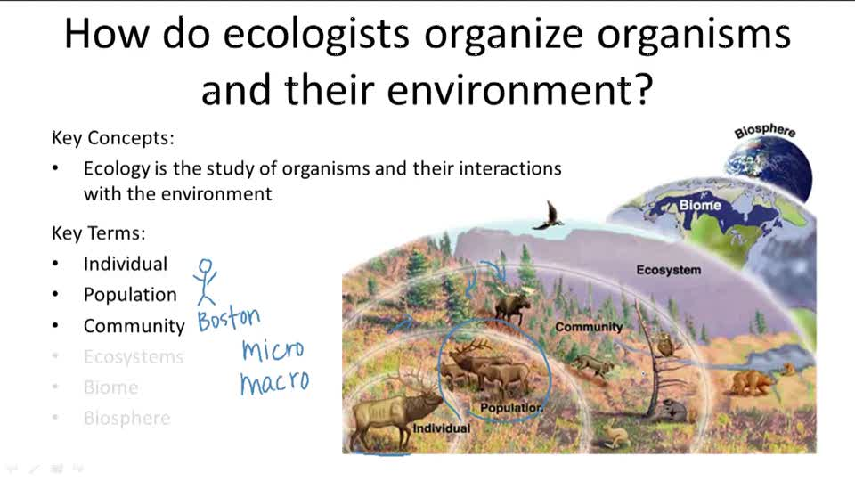 Levels of Ecological Organization - Overview