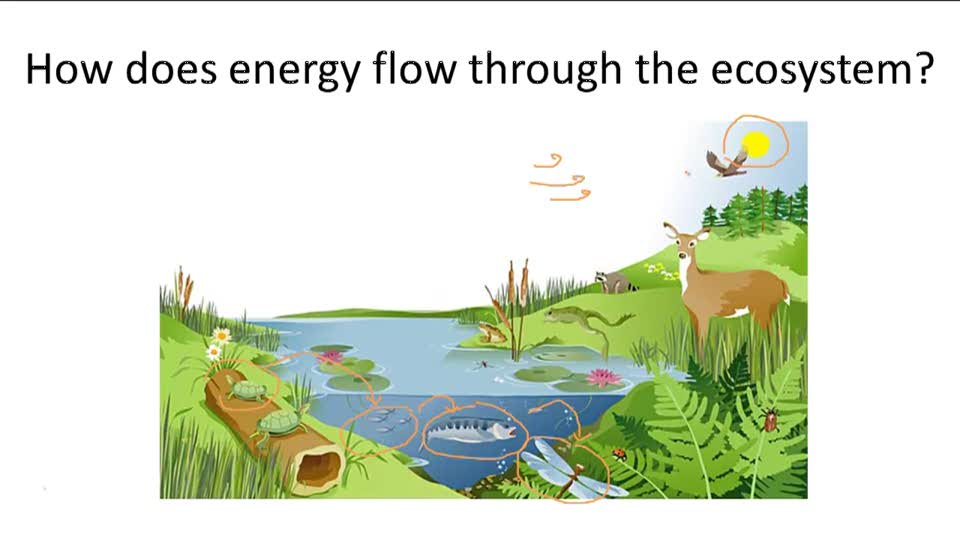 Energy Flow - Overview