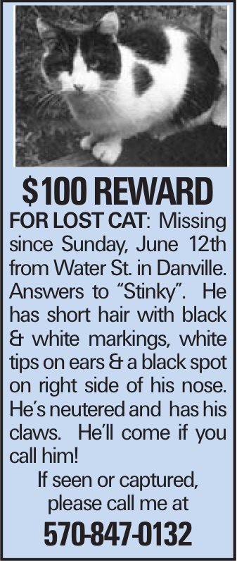 """$100 Reward FORLOSTCAT:Missing since Sunday, June 12th from Water St. in Danville. Answers to """"Stinky"""". He has short hair with black & white markings, white tips on ears & a black spot on right side of his nose. He's neutered and has his claws. He'll come if you call him! If seen or captured, please call me at 570-847-0132"""
