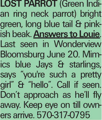 """Lost parrot (Green Indian ring neck parrot) bright green, long blue tail & pinkish beak. Answers to Louie. Last seen in Wonderview Bloomsburg June 20. Mimics blue Jays & starlings, says """"you're such a pretty girl"""" & """"hello"""". Call if seen. Don't approach as he'll fly away. Keep eye on till owners arrive. 570-317-0795"""