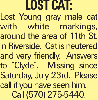 """lost cat: Lost Young gray male cat with white markings, around the area of 11th St. in Riverside. Cat is neutered and very friendly. Answers to """"Clyde"""". Missing since Saturday, July 23rd. Please call if you have seen him. Call (570) 275-5440."""