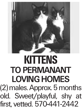 kittens to permanant loving homes (2) males. Approx. 5 months old. Sweet/playful, shy at first, vetted. 570-441-2442