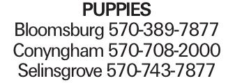 puppies Bloomsburg 570-389-7877 Conyngham 570-708-2000 Selinsgrove 570-743-7877