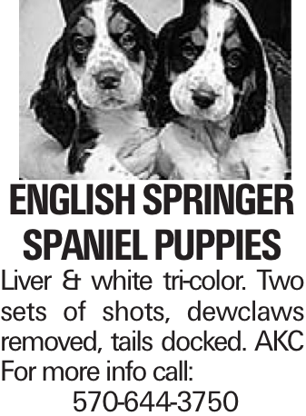English Springer Spaniel puppies Liver & white tri-color. Two sets of shots, dewclaws removed, tails docked. AKC For more info call: 570-644-3750