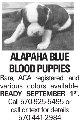 Alapaha Blue Blood Puppies Rare, ACA registered, and various colors available. Ready September 1st. Call 570-925-5495 or call or text for details 570-441-2984