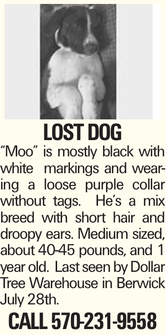 "lost dog ""Moo"" is mostly black with white markings and wearing a loose purple collar without tags. He's a mix breed with short hair and droopy ears. Medium sized, about 40-45 pounds, and 1 year old. Last seen by Dollar Tree Warehouse in Berwick July 28th. Call 570-231-9558"