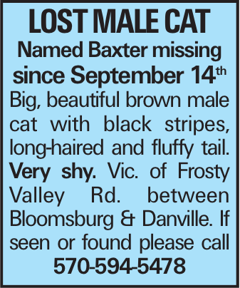 Lost Male Cat Named Baxter missing since September 14th Big, beautiful brown male cat with black stripes, long-haired and fluffy tail. Very shy. Vic. of Frosty Valley Rd. between Bloomsburg & Danville. If seen or found please call 570-594-5478