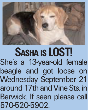 Sasha is LOST! She's a 13-year-old female beagle and got loose on Wednesday September 21 around 17th and Vine Sts. in Berwick. If seen please call 570-520-5902.