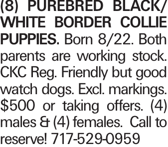 (8) Purebred black/ white Border Collie Puppies. Born 8/22. Both parents are working stock. CKC Reg. Friendly but good watch dogs. Excl. markings. $500 or taking offers. (4) males & (4) females. Call to reserve! 717-529-0959