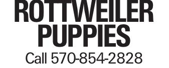 Rottweiler Puppies Call 570-854-2828