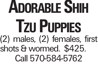 Adorable Shih Tzu Puppies (2) males, (2) females, first shots & wormed. $425. Call 570-584-5762
