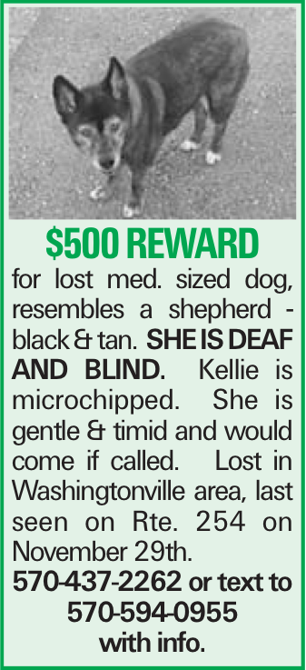 $500 reward for lost med. sized dog, resembles a shepherd - black &tan. She is deaf and blind. Kellie is microchipped. She is gentle & timid and would come if called. Lost in Washingtonville area, last seen on Rte. 254 on November 29th. 570-437-2262 or text to 570-594-0955 with info.