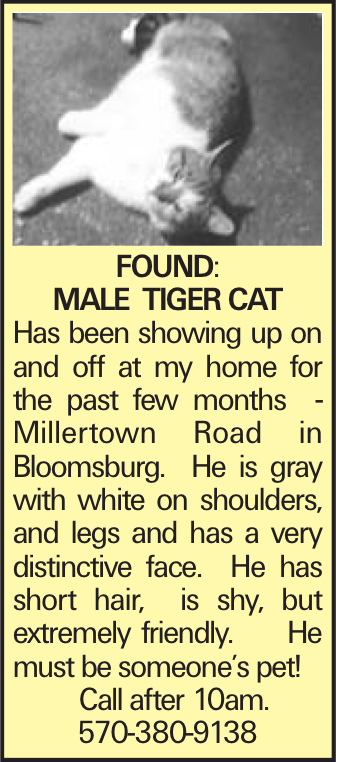 FOUND: Male tiger cat Has been showing up on and off at my home for the past few months - Millertown Road in Bloomsburg. He is gray with white on shoulders, and legs and has a very distinctive face. He has short hair, is shy, but extremely friendly. He must be someone's pet! Call after 10am. 570-380-9138
