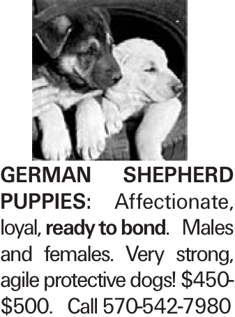 German Shepherd puppies: Affectionate, loyal, ready to bond. Males and females. Very strong, agile protective dogs! $450-$500. Call 570-542-7980