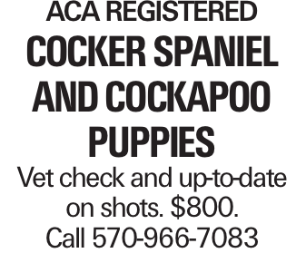 ACA Registered Cocker Spaniel and Cockapoo Puppies Vet check and up-to-date on shots. $800. Call 570-966-7083