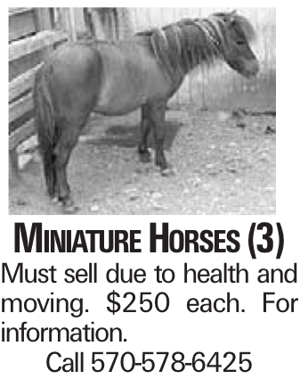 Miniature Horses (3) Must sell due to health and moving. $250 each. For information. Call 570-578-6425