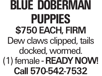 blue Doberman puppies $750 each, firm Dew claws clipped, tails docked, wormed. (1) female - READYNOW! Call 570-542-7532