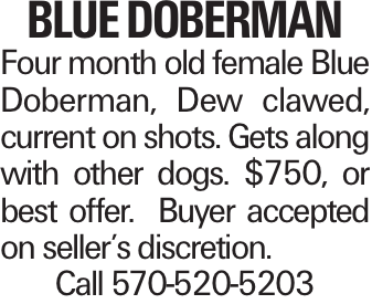 blue Doberman Four month old female Blue Doberman, Dew clawed, current on shots. Gets along with other dogs. $750, or best offer. Buyer accepted on seller's discretion. Call 570-520-5203