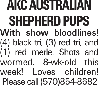 AKC australian shepherd Pups With show bloodlines! (4) black tri, (3) red tri, and (1) red merle. Shots and wormed. 8-wk-old this week! Loves children! Please call (570)854-8682