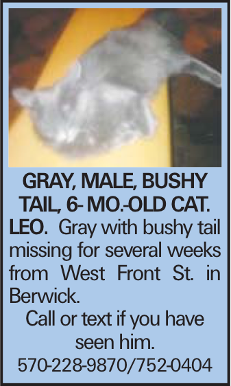 Gray, male, bushy tail, 6- mo.-old cat. LEO. Gray with bushy tail missing for several weeks from West Front St. in Berwick. Call or text if you have seen him. 570-228-9870/752-0404