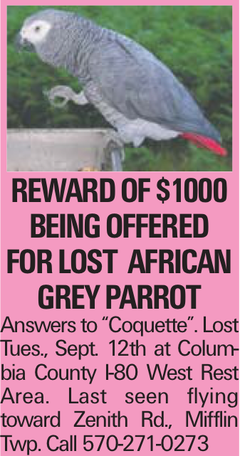 """Reward of $1000 being offered FOR LOST AFRICAN GREY PARROT Answers to """"Coquette"""". Lost Tues., Sept. 12th at Columbia County I-80 West Rest Area. Last seen flying toward Zenith Rd., Mifflin Twp. Call 570-271-0273"""