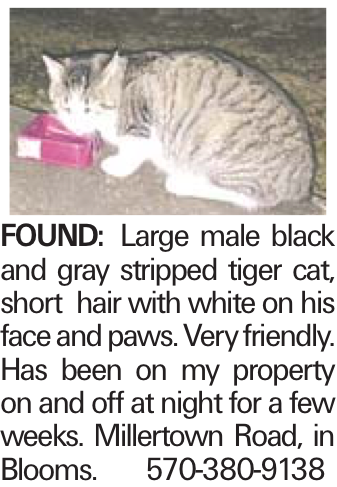 FOUND: Large male black and gray stripped tiger cat, short hair with white on his face and paws. Very friendly. Has been on my property on and off at night for a few weeks. Millertown Road, in Blooms. 570-380-9138