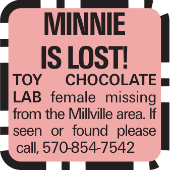 Minnie is Lost! Toy chocolate lab female missing from the Millville area. If seen or found please call, 570-854-7542