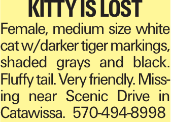 Kitty is Lost Female, medium size white cat w/darker tiger markings, shaded grays and black. Fluffy tail. Very friendly. Missing near Scenic Drive in Catawissa. 570-494-8998