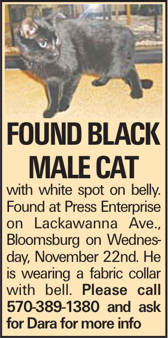 Found Black male cat with white spot on belly. Found at Press Enterprise on Lackawanna Ave., Bloomsburg on Wednesday, November 22nd. He is wearing a fabric collar with bell. Please call 570-389-1380 and ask for Dara for more info