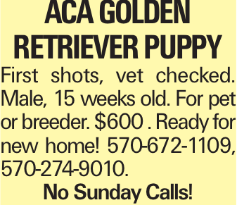 ACA Golden RetrIEver PuppY First shots, vet checked. Male, 15 weeks old. For pet or breeder. $600 . Ready for new home! 570-672-1109, 570-274-9010. No Sunday Calls!