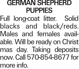 GERMAN SHEPHERD PUPPIES Full long-coat litter. Solid blacks and black/reds. Males and females available. Will be ready on Christ mas day. Taking deposits now. Call 570-854-8677 for more info.