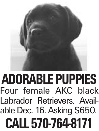 Adorable puppies Four female AKC black Labrador Retrievers. Available Dec. 16. Asking $650. Call 570-764-8171