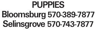 puppies Bloomsburg 570-389-7877 Selinsgrove 570-743-7877