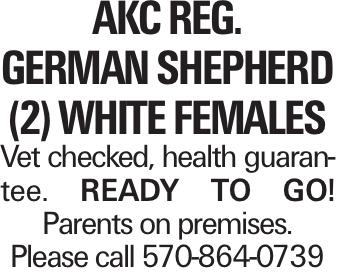 AKC Reg. GERMAN SHEPherd (2) white females Vet checked, health guarantee. Ready to go! Parents on premises. Please call 570-864-0739