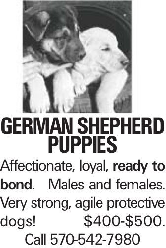 German Shepherd puppies Affectionate, loyal, ready to bond. Males and females. Very strong, agile protective dogs! $400-$500. Call 570-542-7980