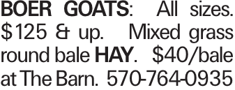 Boer goats: All sizes. $125 & up. Mixed grass round bale hay. $40/bale at The Barn. 570-764-0935