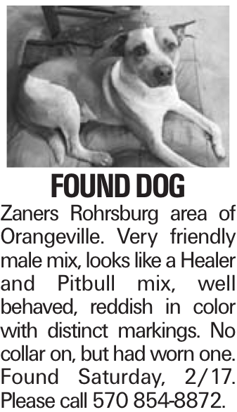 Found Dog Zaners Rohrsburg area of Orangeville. Very friendly male mix, looks like a Healer and Pitbull mix, well behaved, reddish in color with distinct markings. No collar on, but had worn one. Found Saturday, 2/17. Please call 570 854-8872.