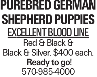 Purebred German Shepherd Puppies Excellent blood line Red & Black & Black & Silver. $400 each. Ready to go! 570-985-4000