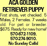 ACA Golden RetrIEver PuppY First shots, vet checked. 5 Males, 2 Females. 7 weeks old. For pet or breeder. $675. Ready for new home! 570-672-1109, 570-274-9010. No Sunday Calls!
