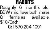 Rabbits Roughly 6 months old. B&W mix, have both males & females available. $10/Each. Call 570-204-1091