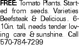 Free: Tomato Plants. Started from seeds. Varieties Beefsteak & Delicious. 6-10in. tall, needs tender loving care &sunshine. Call 570-784-7299