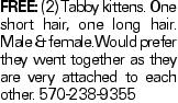 FREE: (2) Tabby kittens. One short hair, one long hair. Male & female.Would prefer they went together as they are very attached to each other. 570-238-9355
