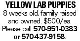 Yellow Lab puppies 8 weeks old, family raised and owned. $500/ea. Please call 570-951-0383 or 570-437-9158.