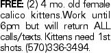 Free: (2) 4 mo. old female calico kittens.Work until 6pm but will return ALL calls/texts. Kittens need 1st shots. (570)336-3494.