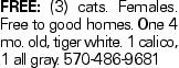 Free: (3) cats. Females. Free to good homes. One 4 mo. old, tiger white. 1 calico, 1 all gray. 570-486-9681
