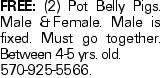 Free: (2) Pot Belly Pigs. Male &Female. Male is fixed. Must go together. Between 4-5 yrs. old. 570-925-5566.